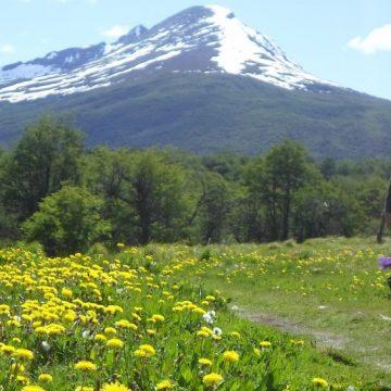 Parque_Tierra_del_Fuego_2015