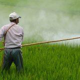 plaguicida, agrotóxicos, salud, contaminación