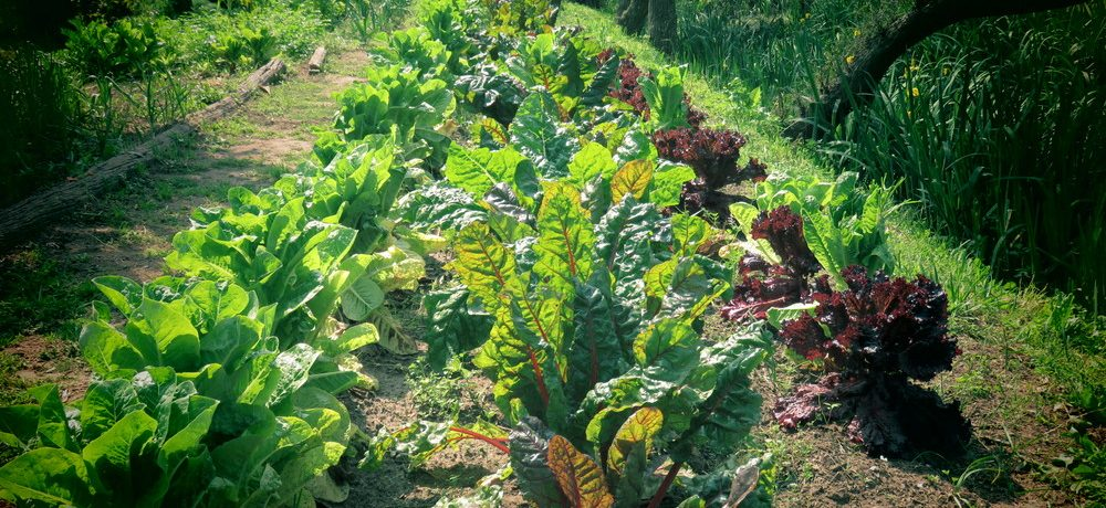 huerta, agroecología, producción,dirección nacional de agroecología