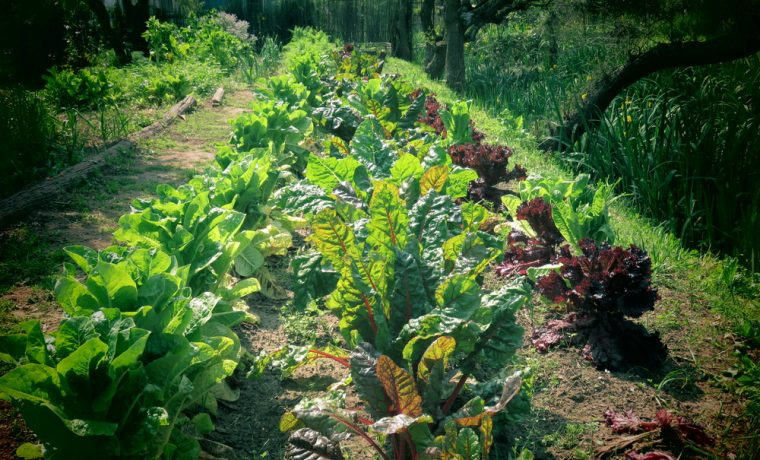 huerta, El Patio d las Rosas, alimento, ecología