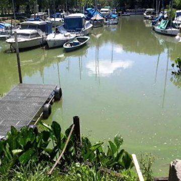 bacteria, salud, Paraná, Río de la Plata, contaminación